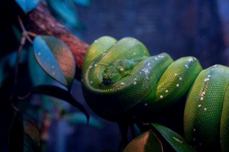 """Buchkritik """"Python 3 Programmieren für Einsteiger"""""""